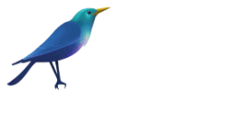 Starlings Television